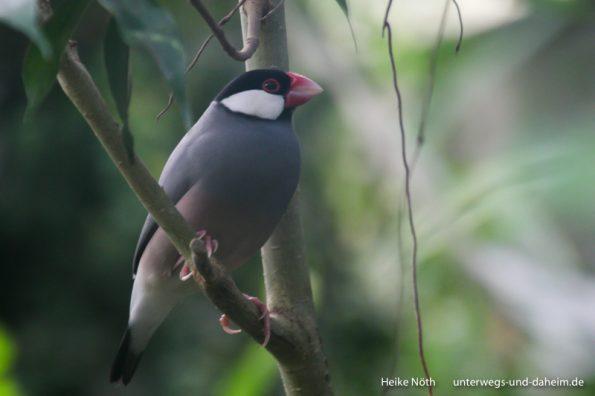 Vogelpark Marlow (1)