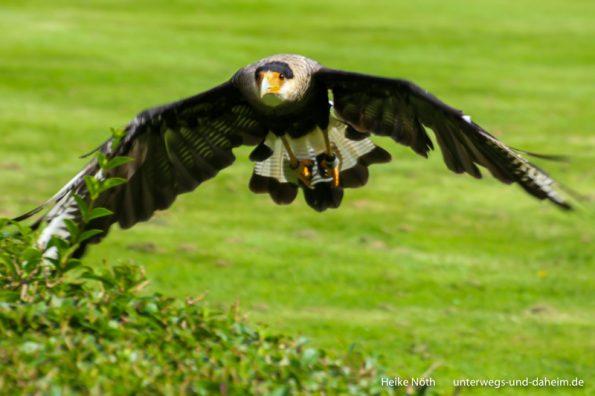 Vogelpark Marlow (10)