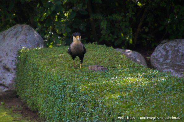 Vogelpark Marlow (11)