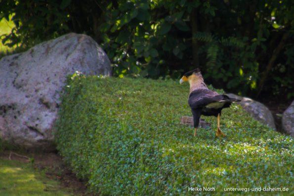 Vogelpark Marlow (12)