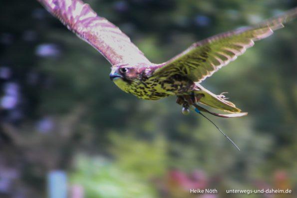 Vogelpark Marlow (14)