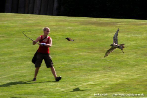 Vogelpark Marlow (17)
