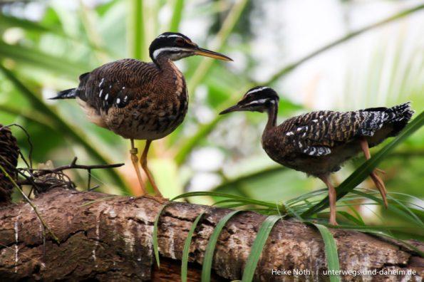 Vogelpark Marlow (2)