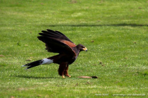 Vogelpark Marlow (21)