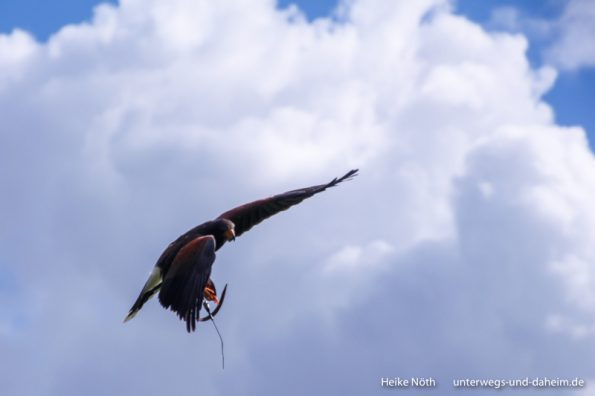 Vogelpark Marlow (23)