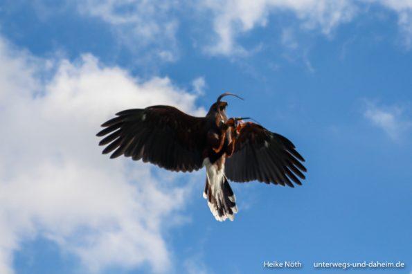 Vogelpark Marlow (25)