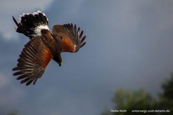 Vogelpark Marlow (27)