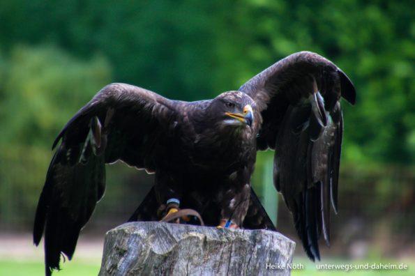 Vogelpark Marlow (33)