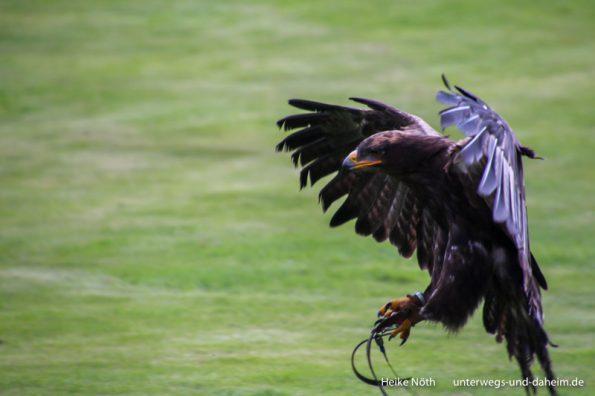 Vogelpark Marlow (34)