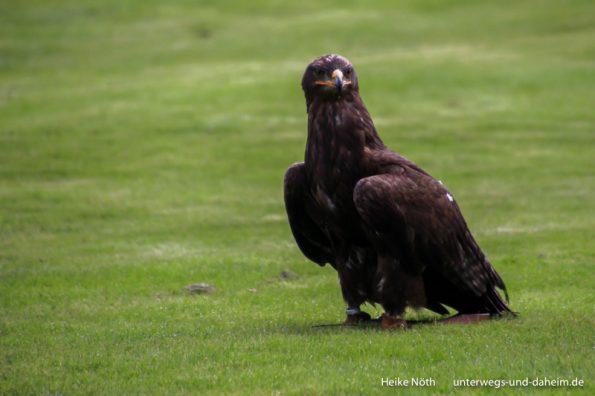 Vogelpark Marlow (35)