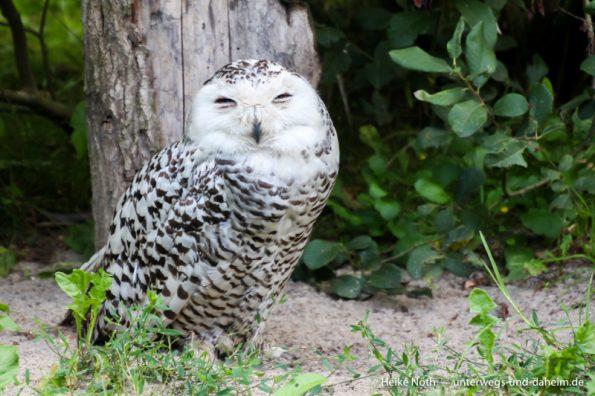 Vogelpark Marlow (4)