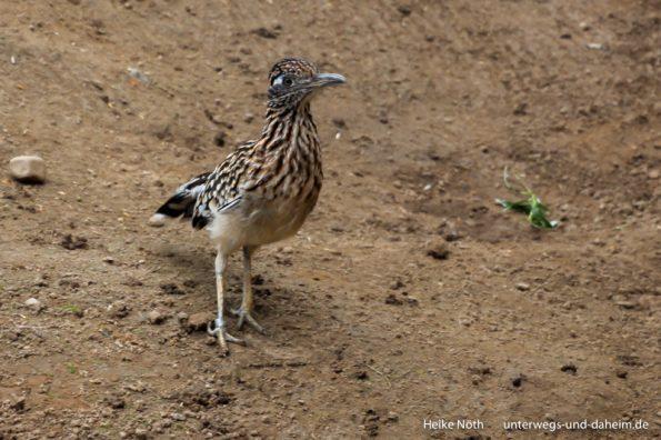 Vogelpark Marlow (43)