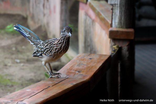 Vogelpark Marlow (44)