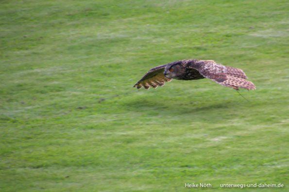 Vogelpark Marlow (5)