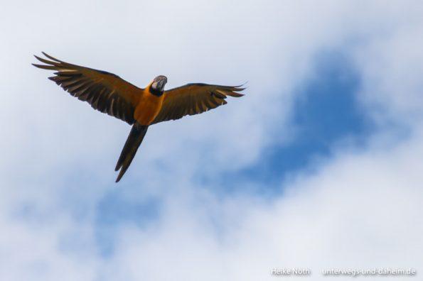 Vogelpark Marlow (51)