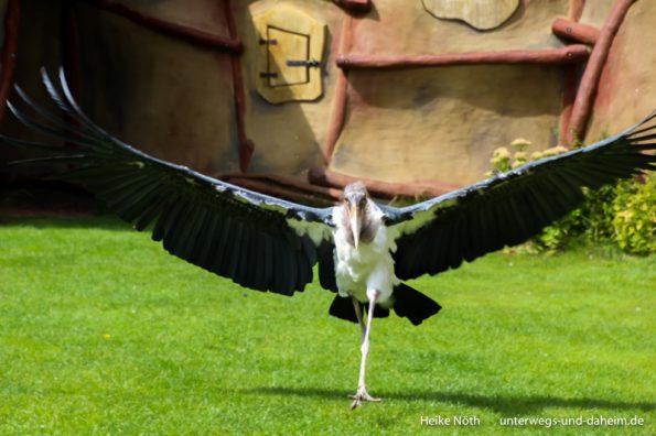 Vogelpark Marlow (53)