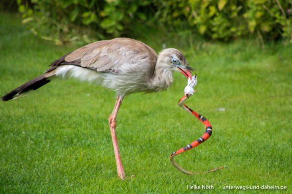Vogelpark Marlow (56)