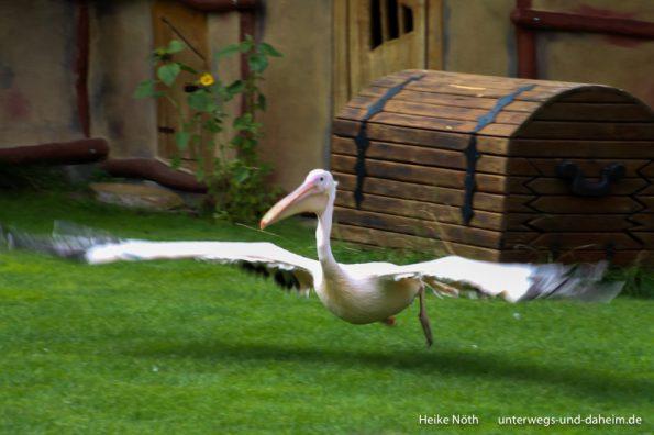 Vogelpark Marlow (58)