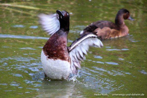 Vogelpark Marlow (59)