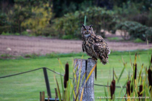 Vogelpark Marlow (6)