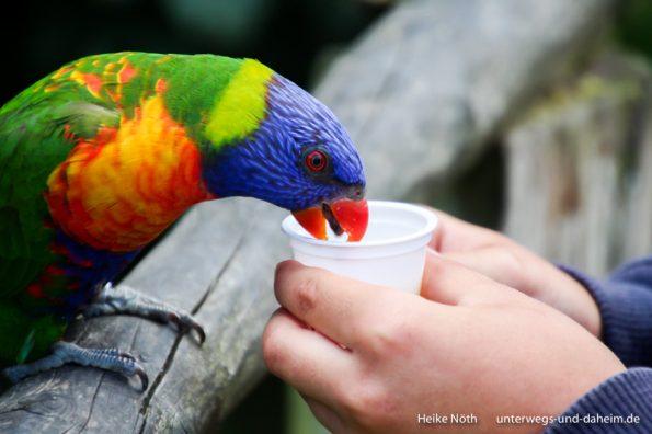 Vogelpark Marlow (68)