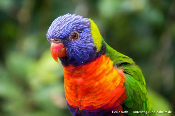 Vogelpark Marlow (69)