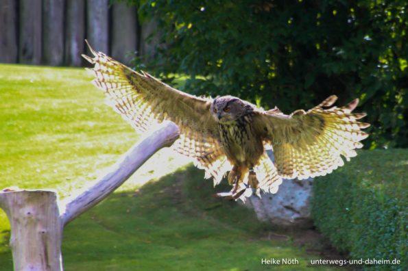 Vogelpark Marlow (7)