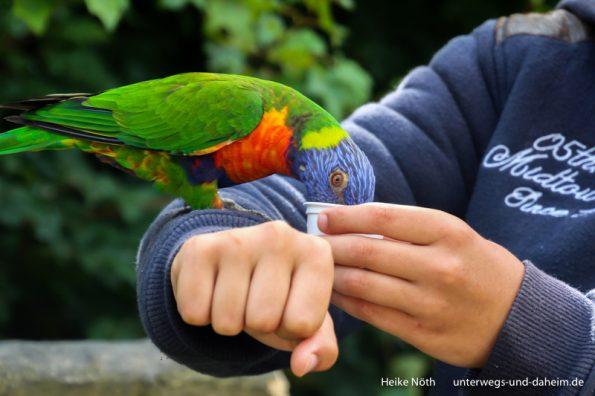Vogelpark Marlow (70)