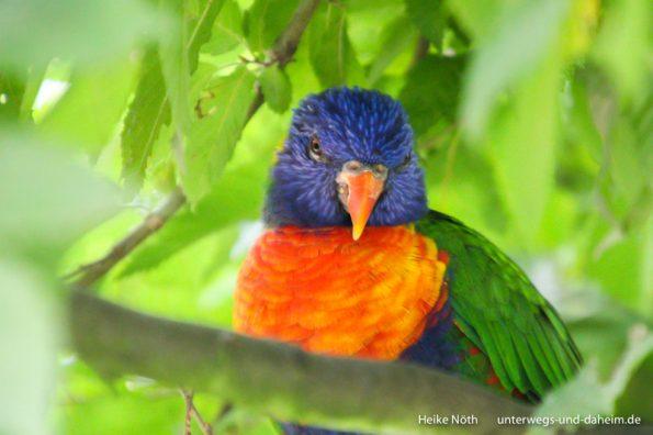 Vogelpark Marlow (72)