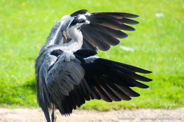 Vogelpark Marlow (76)