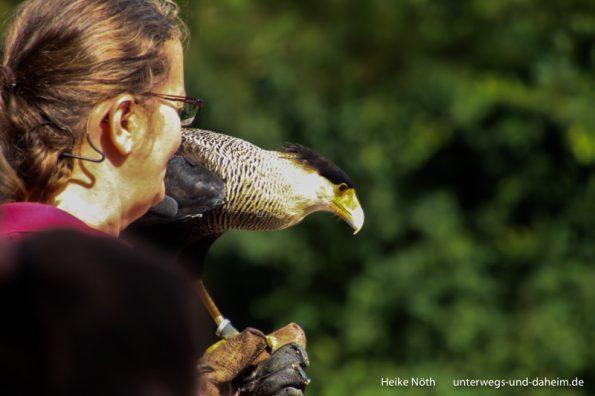 Vogelpark Marlow (8)