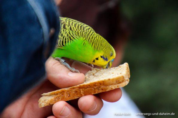 Vogelpark Marlow (80)