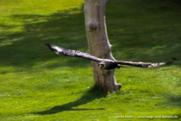 Vogelpark Marlow (9)