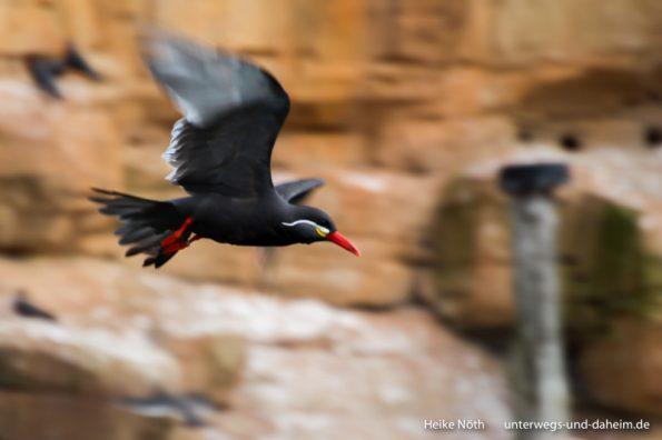 Vogelpark Marlow (90)