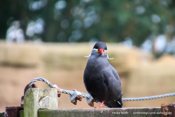 Vogelpark Marlow (92)