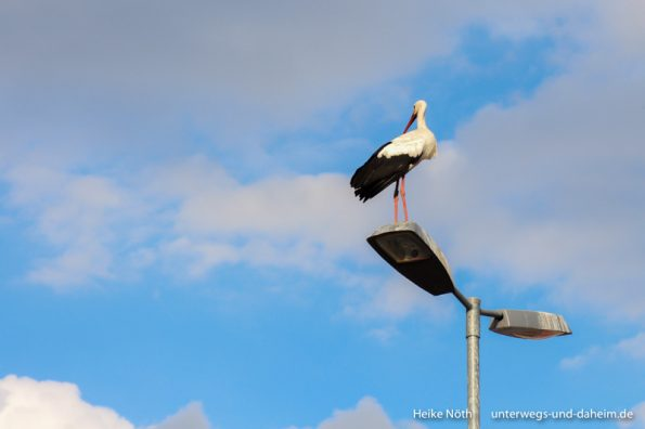 Vogelpark Marlow (99)