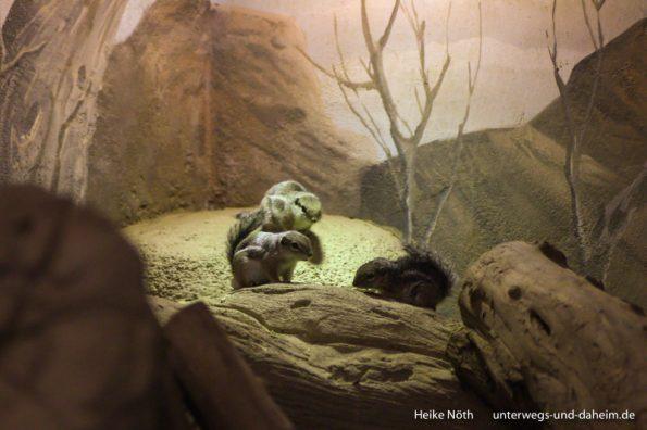 Zoo Rostock (14)