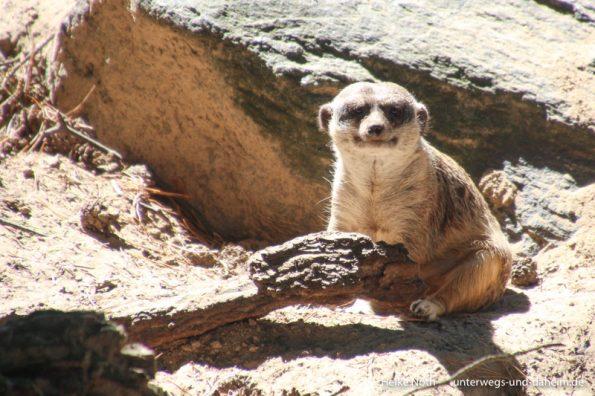 Zoo Rostock (40)