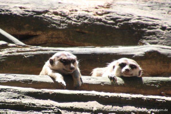 Zoo Rostock (41)