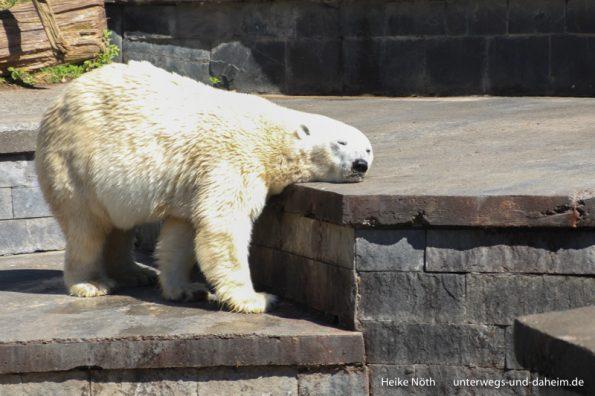 Zoo Rostock (43)